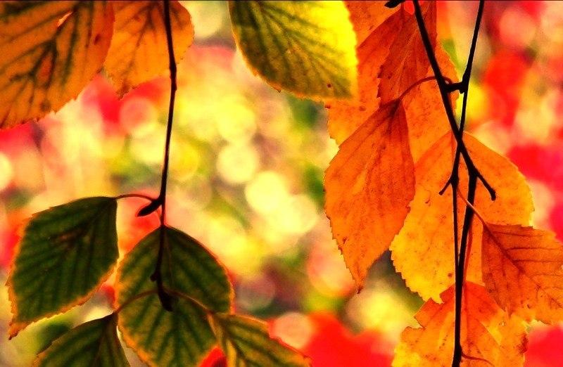 а я ловлю как эти листья