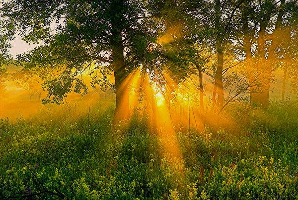Песня яркий солнечный луч заиграл серебром скачать