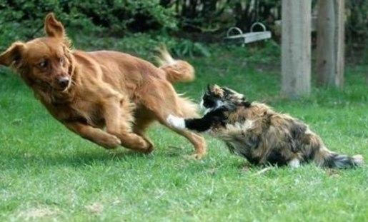 Снится что нападает собака